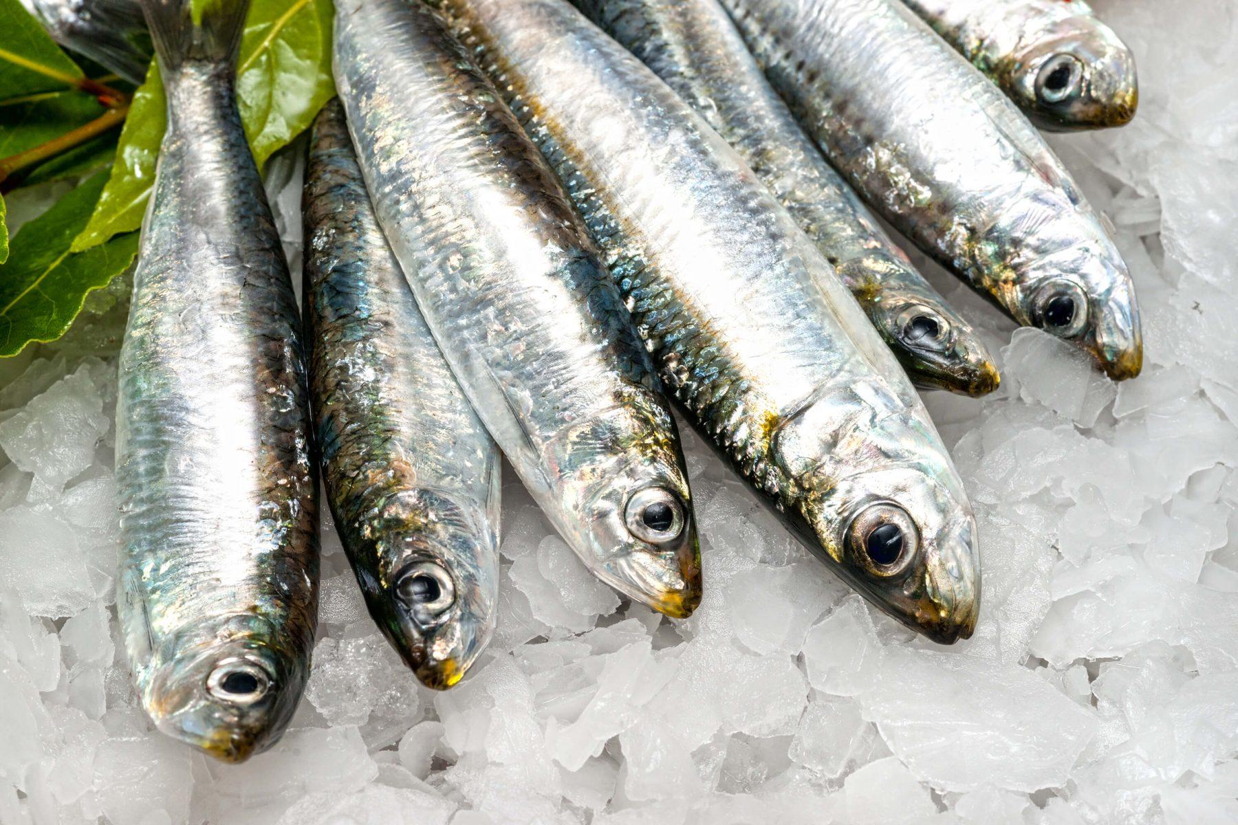 Фото море и рыбы в высоком разрешении прежней работе